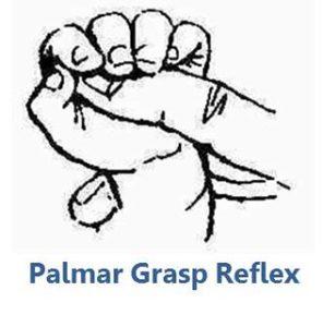 Palmar reflex